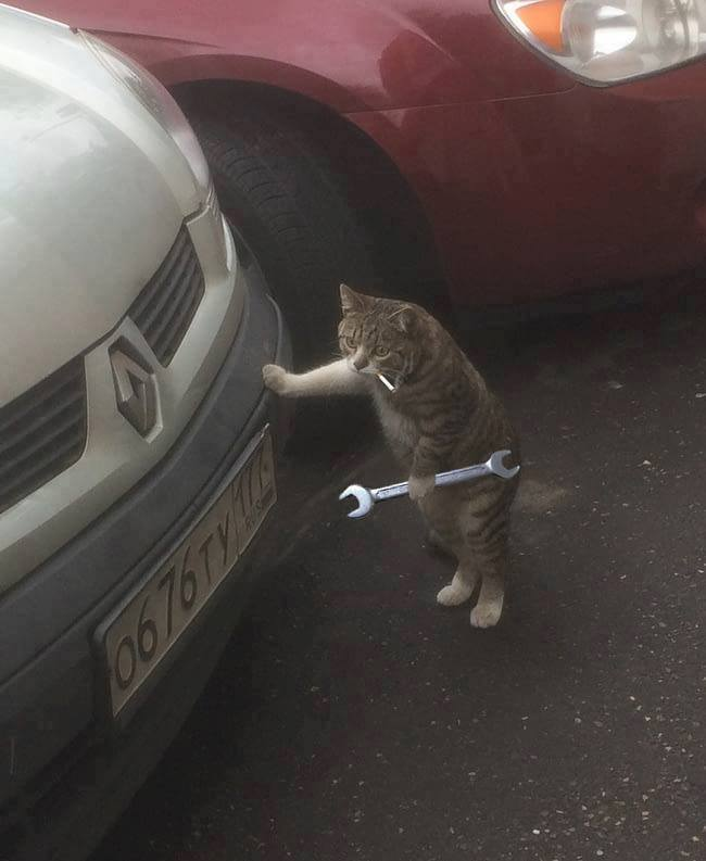 Cat with wrench.jpg