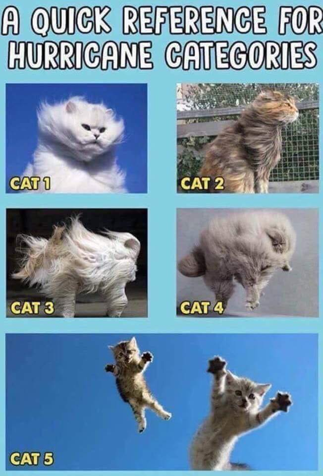 Hurricane Cats.jpg
