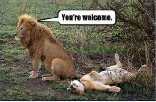 lion welcome.png