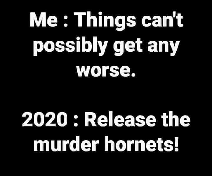 release the hornets.jpeg