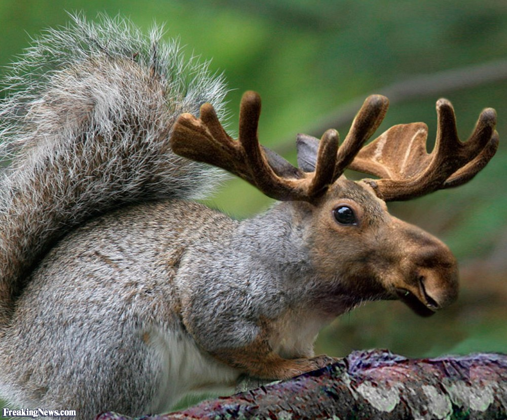 Squirrel Animals Pictures - Freaking News.jpg